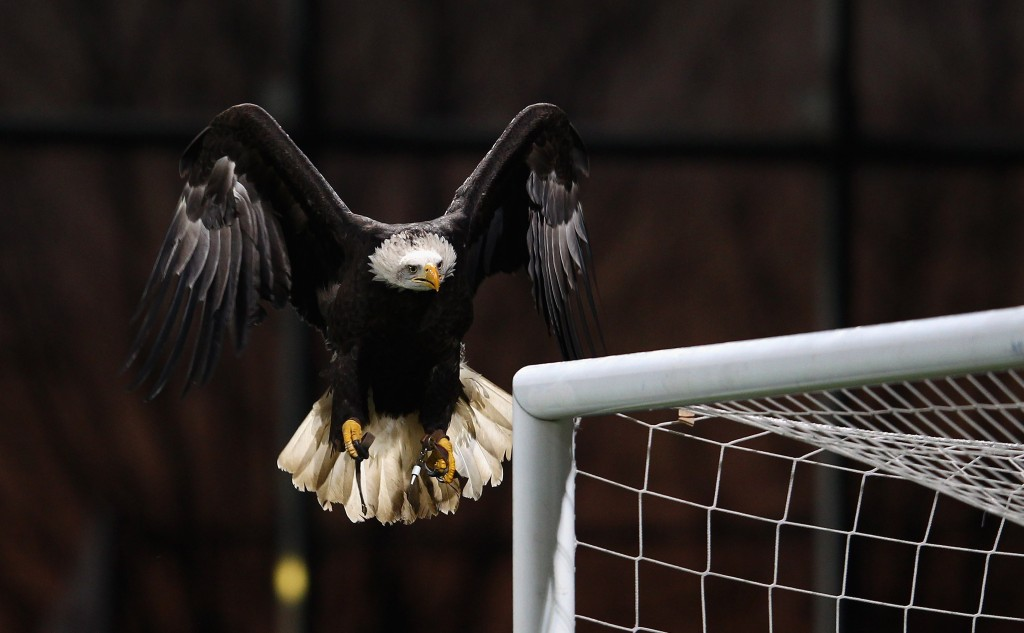 Bald eagle soccer